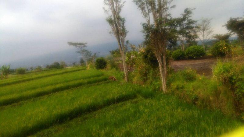 Tanah Dijual di Jalan Raya Beji Batu