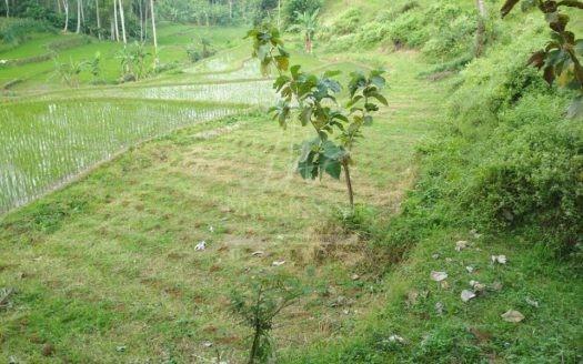 Tanah Perkebunan Murah di Wonosari Kab. Malang