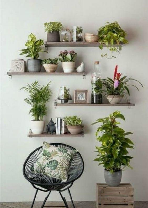 Gunakan Tanaman Hias pada Dinding